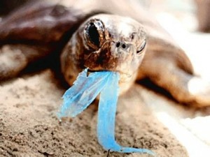 turtle_eating_plastic_bags